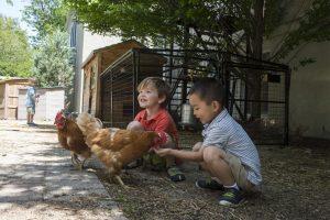 Fessenden Preschool Chickens
